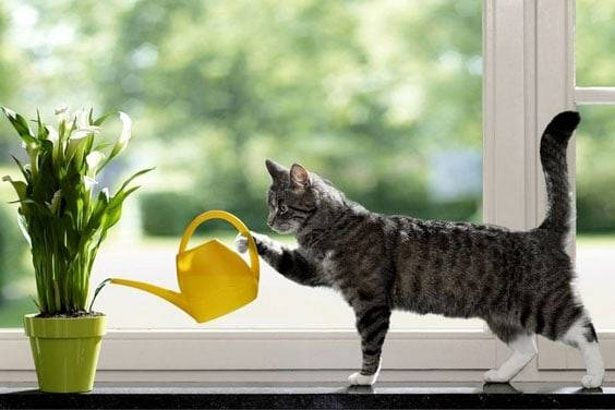 Как часто поливать комнатные цветы