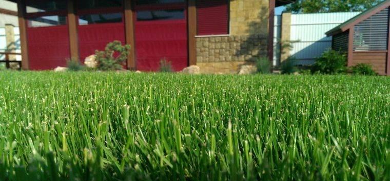 Как правильно сеять газон