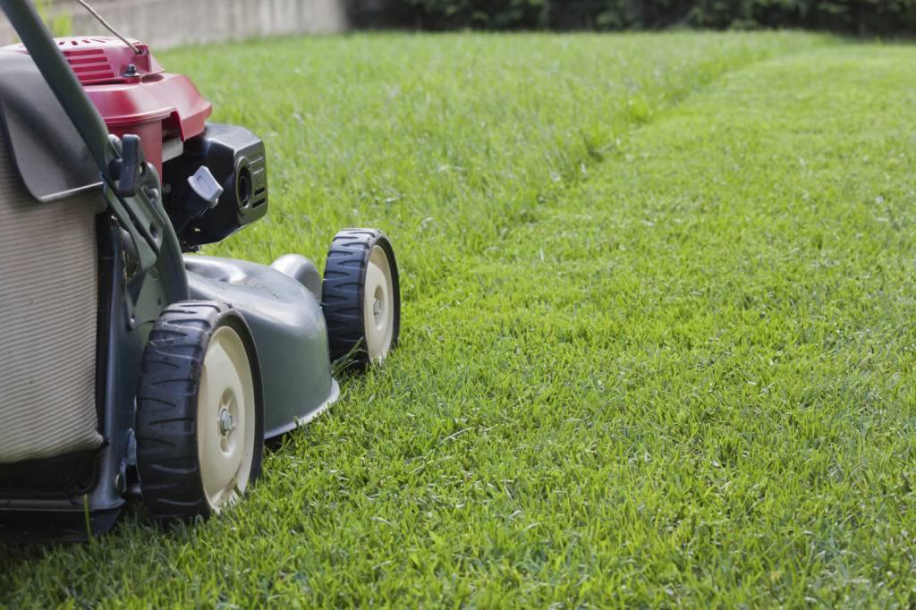 Сеять газон