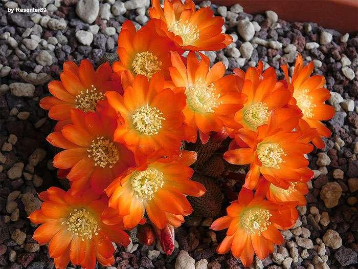 Самые красивые кактусы