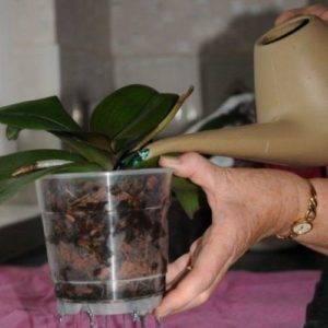 Уход за комнатными орхидеями
