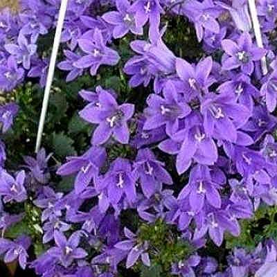 Удобрение для цветов из дрожжей