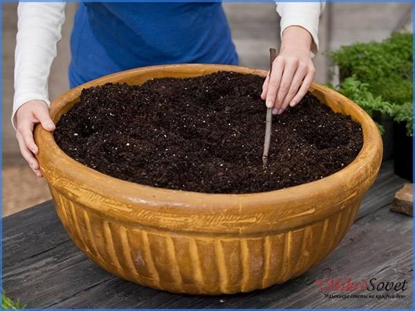 Какой выбрать грунт для растения