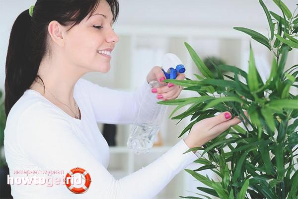 Чем обработать комнатные цветы от тли