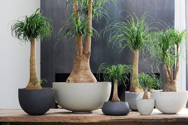 Декоративные деревья для дома