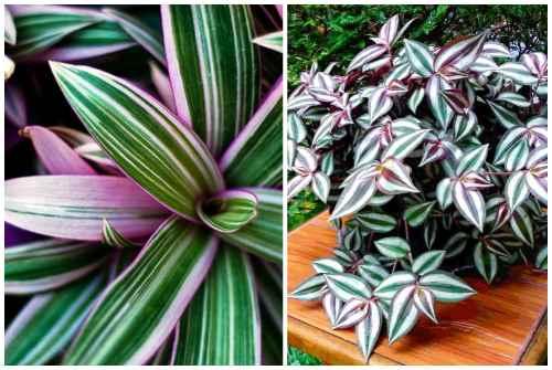 Тенелюбивые комнатные растения для прихожей