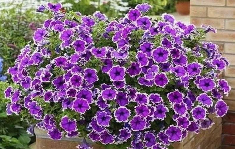 Удобрения для цветения
