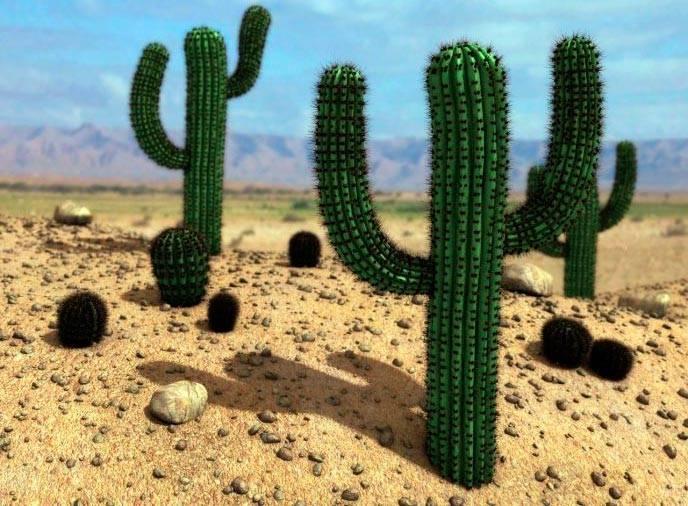 Что делают из кактуса