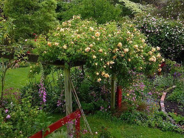 Роза со стеблем