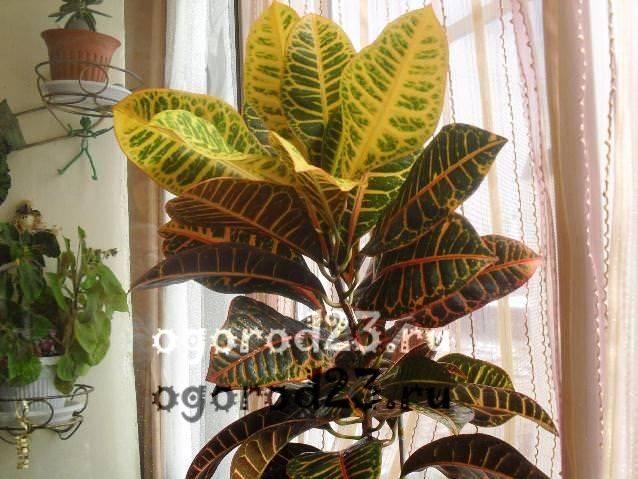 комнатные растения, которые нельзя держать дома – фото и названия 6