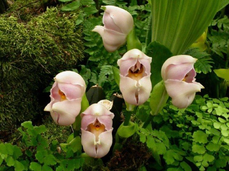 Необычные орхидеи