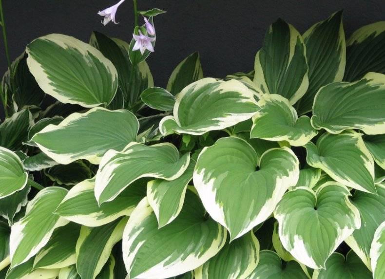 Растения для полутени в саду