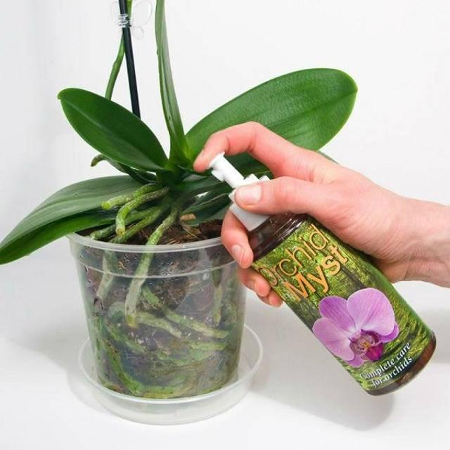 Нужно ли опрыскивать орхидею