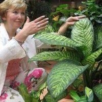 Диффенбахия ядовитое растение
