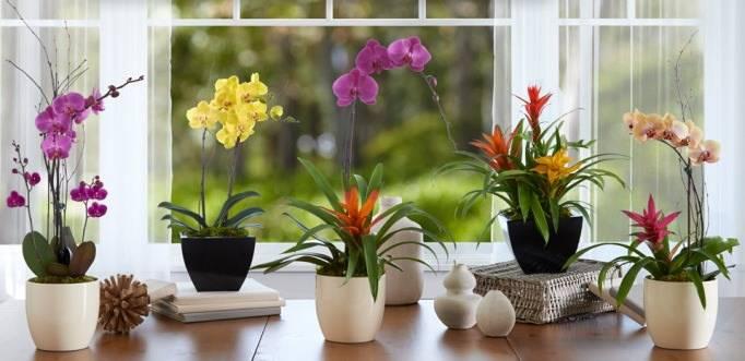 Кашпо для орхидеи какое должно быть