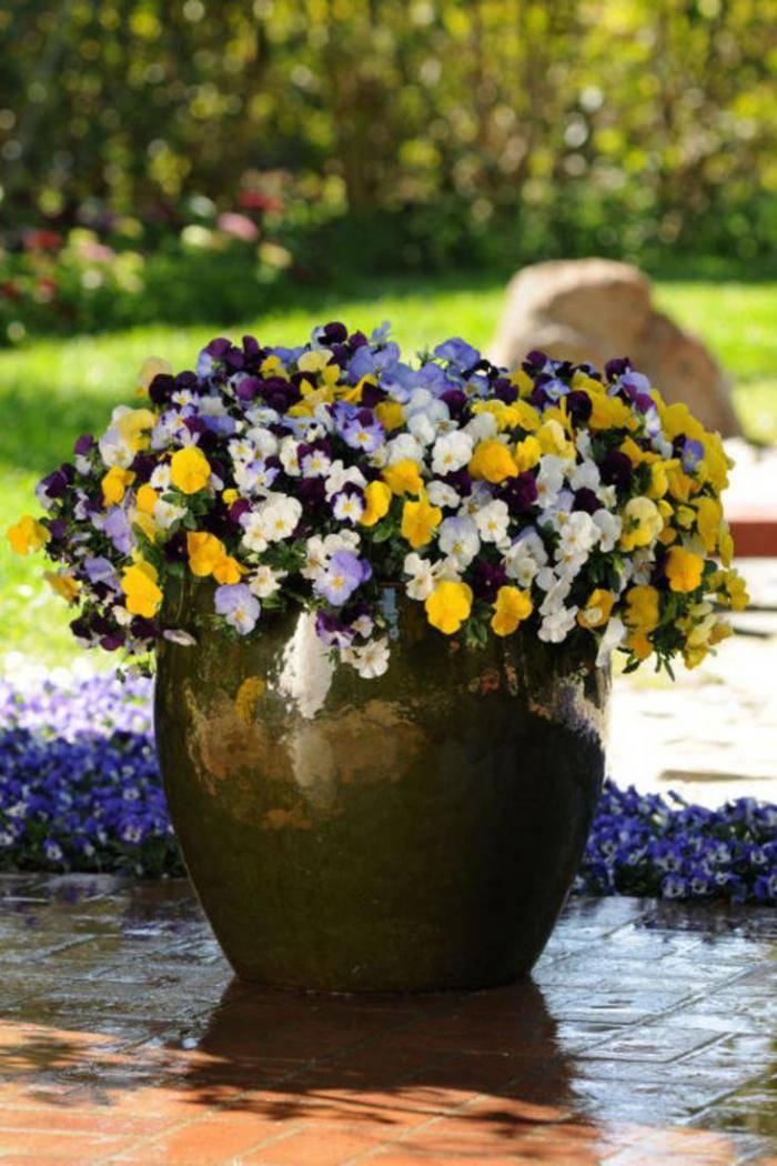 Садовые цветы дома в горшках