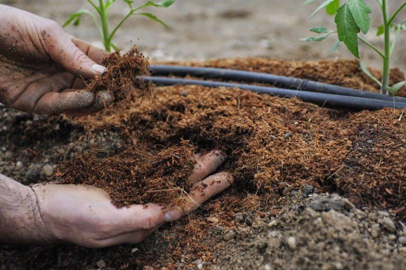 Как улучшить почву суглинок