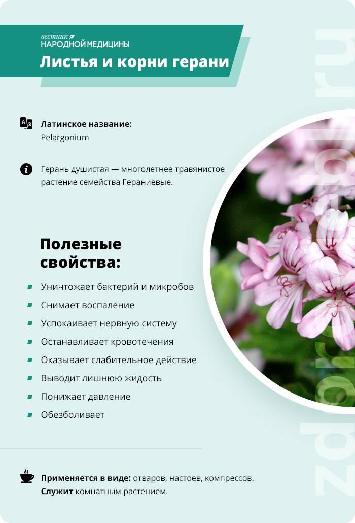растение герань лечебные свойства