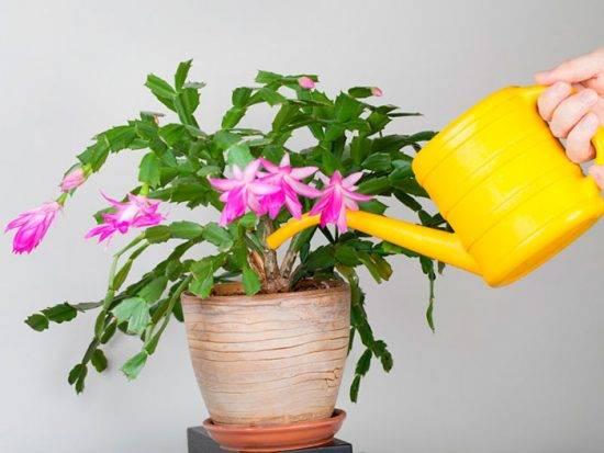 Янтарная кислота для цветов комнатных