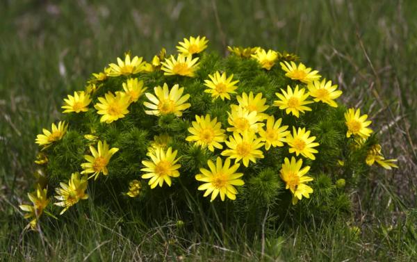 Как называются желтые цветы
