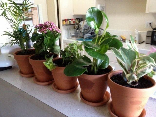 Неприхотливые в уходе домашние растения