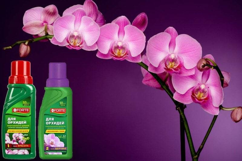 Красота и Здоровье для орхидей