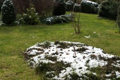 Когда сеять газонную траву осенью или весной