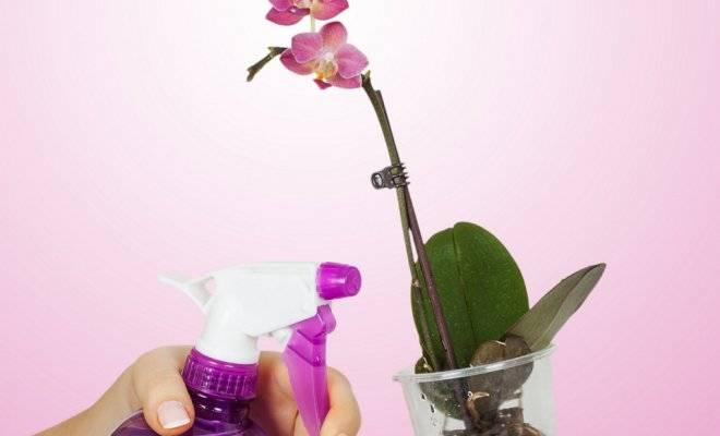 Орхидеи уход в домашних условиях полив