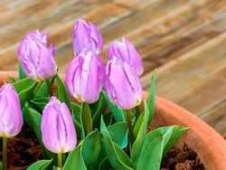 Как правильно посадить цветок в горшок