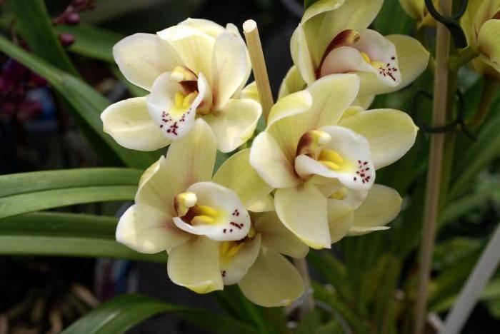Орхидеи в дикой природе