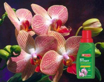 Удобрение покон для орхидей