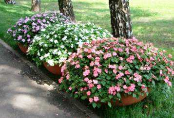 Цветы на улице в горшках