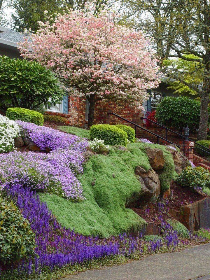 Многолетние цветущие почвопокровники