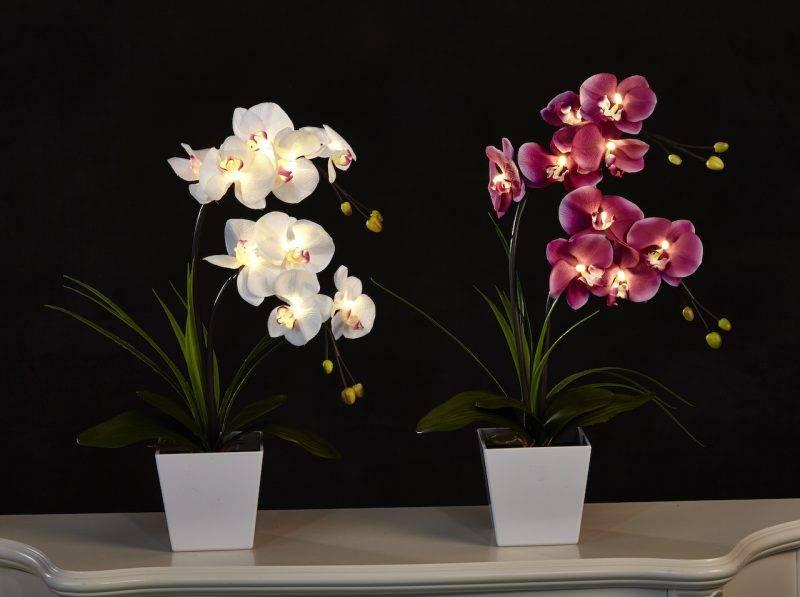 Как ухаживать за купленной орхидеей в горшке