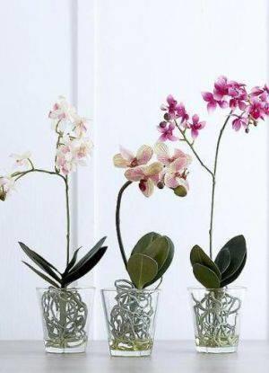 Горшки для орхидей какие должны быть