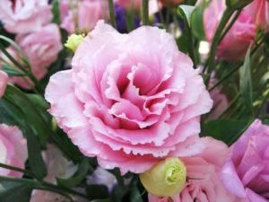 Комнатный цветок с красными колокольчиками