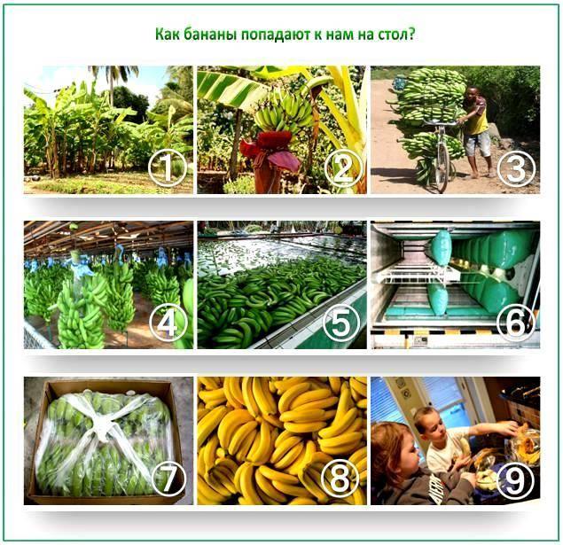 Подкормка из банановой кожуры для овощей
