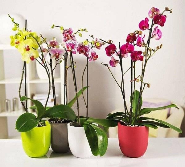 Щитовка на орхидее как избавиться
