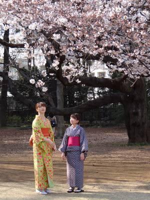 Сакура дерево