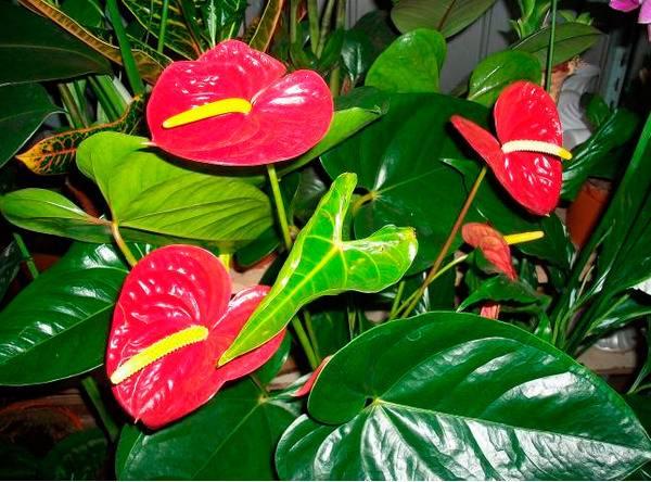 Можно ли пересаживать цветы вечером
