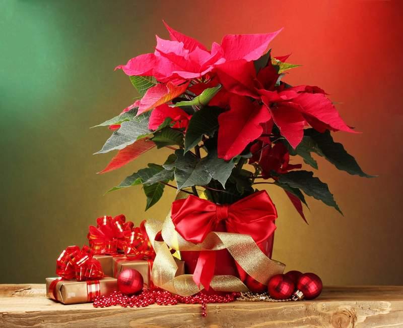 Открытки новогодние цветы