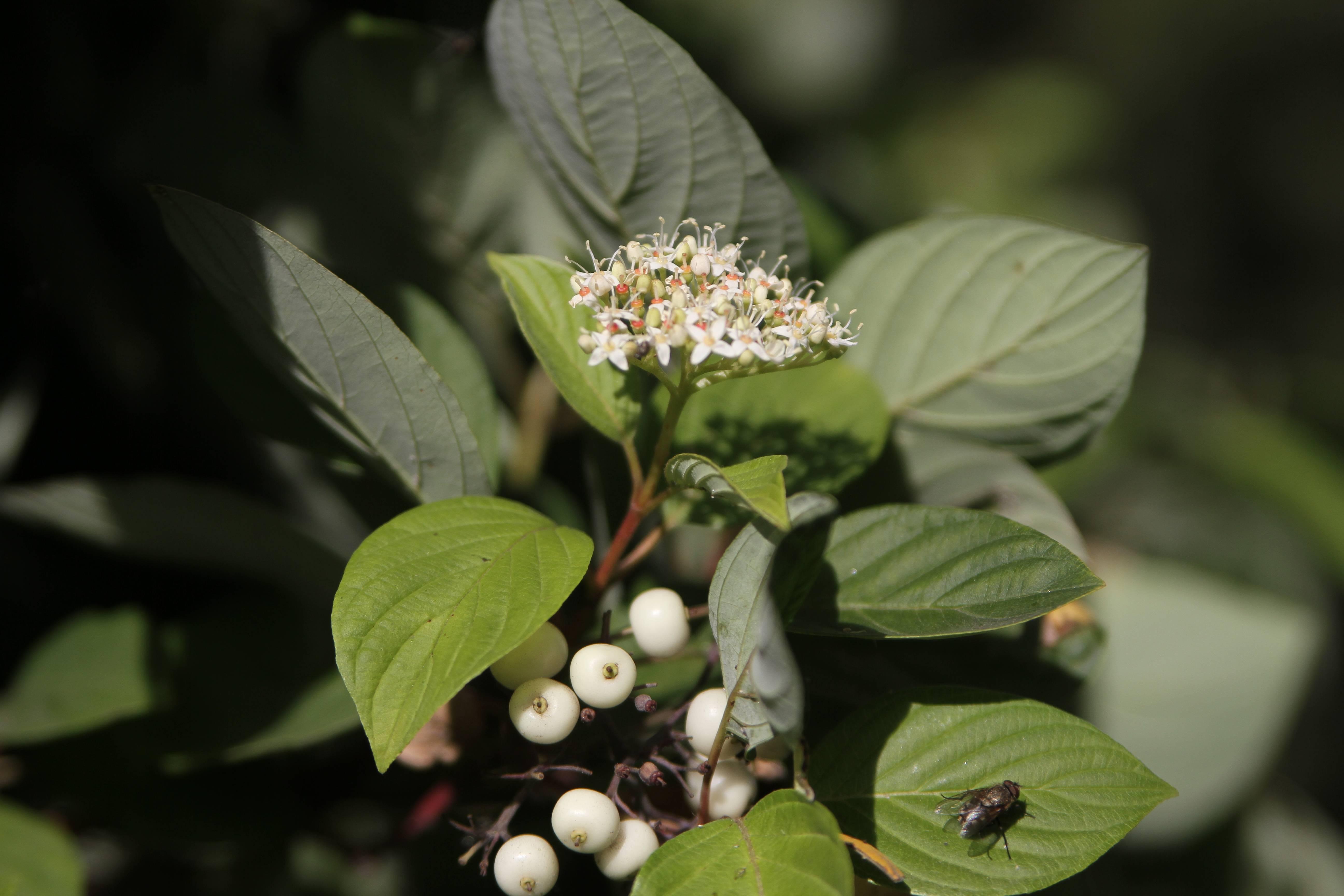 Как называются белые цветы