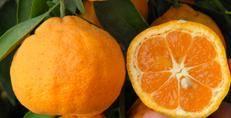 Маленькие мандарины как называются