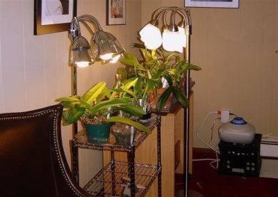 Орхидея что делать после цветения