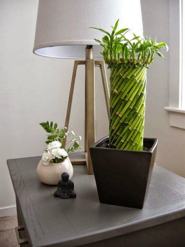 Бамбук вырастить дома
