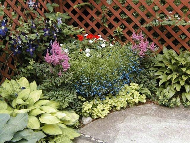 Какие цветы любят тень в саду