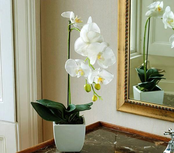 Как выбрать горшок для орхидеи