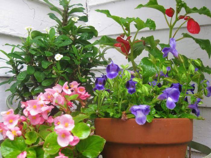Цветы виды названия