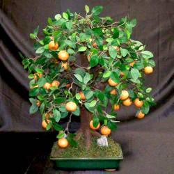 Как поливать мандариновое дерево в домашних условиях
