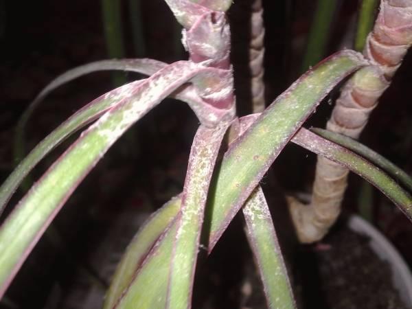Цветок в виде пальмы